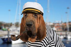 Segelschule Activesail Bordhund